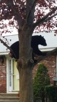 20160514_194604_resized (bear)